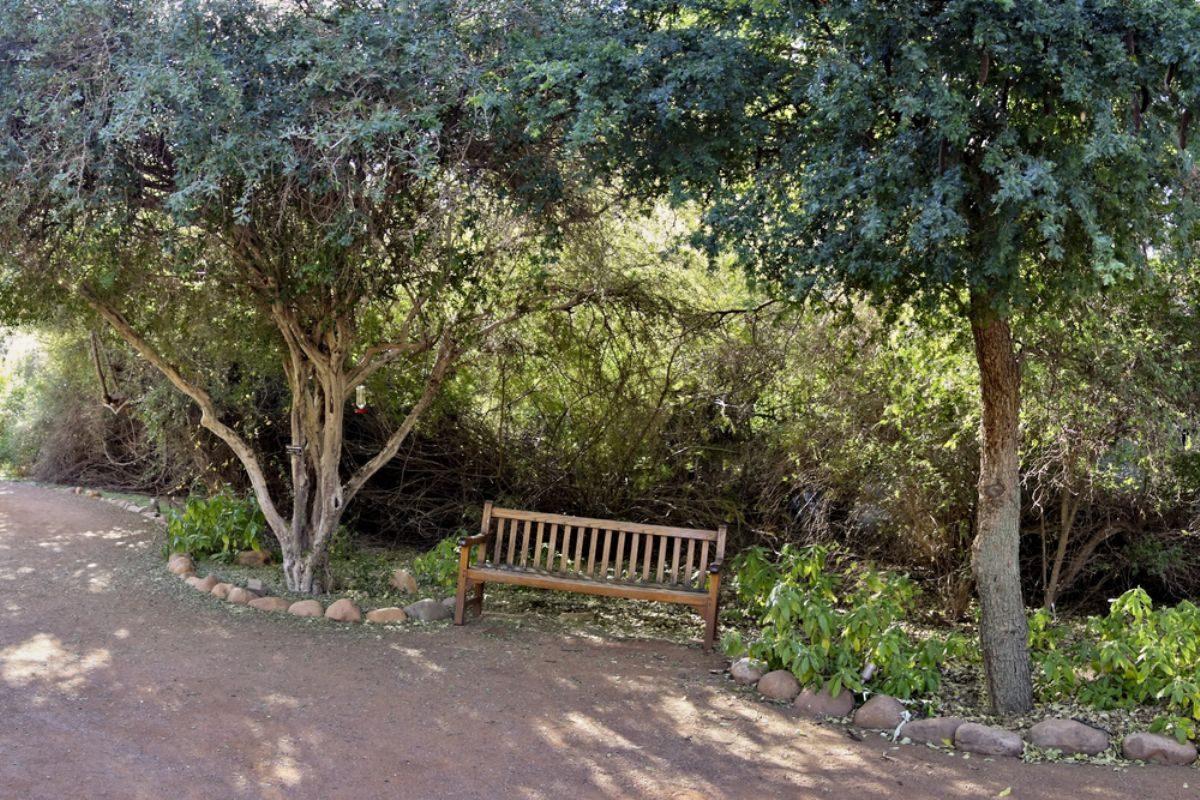 Rüyada Abanoz ağacı görmek