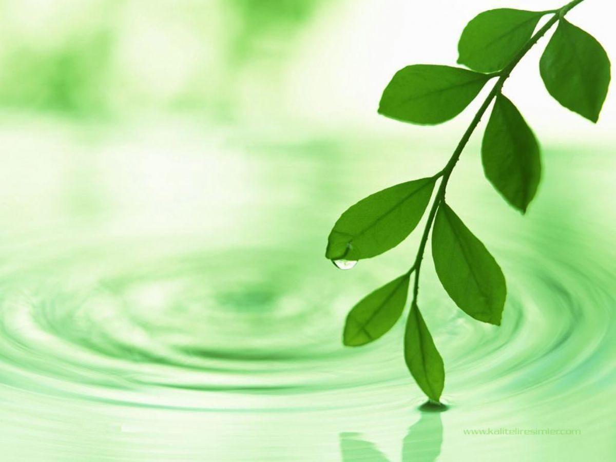 Rüyada Ağaca Çıktığını Görmek Ne Anlama Gelir ( İslami Tabiri)
