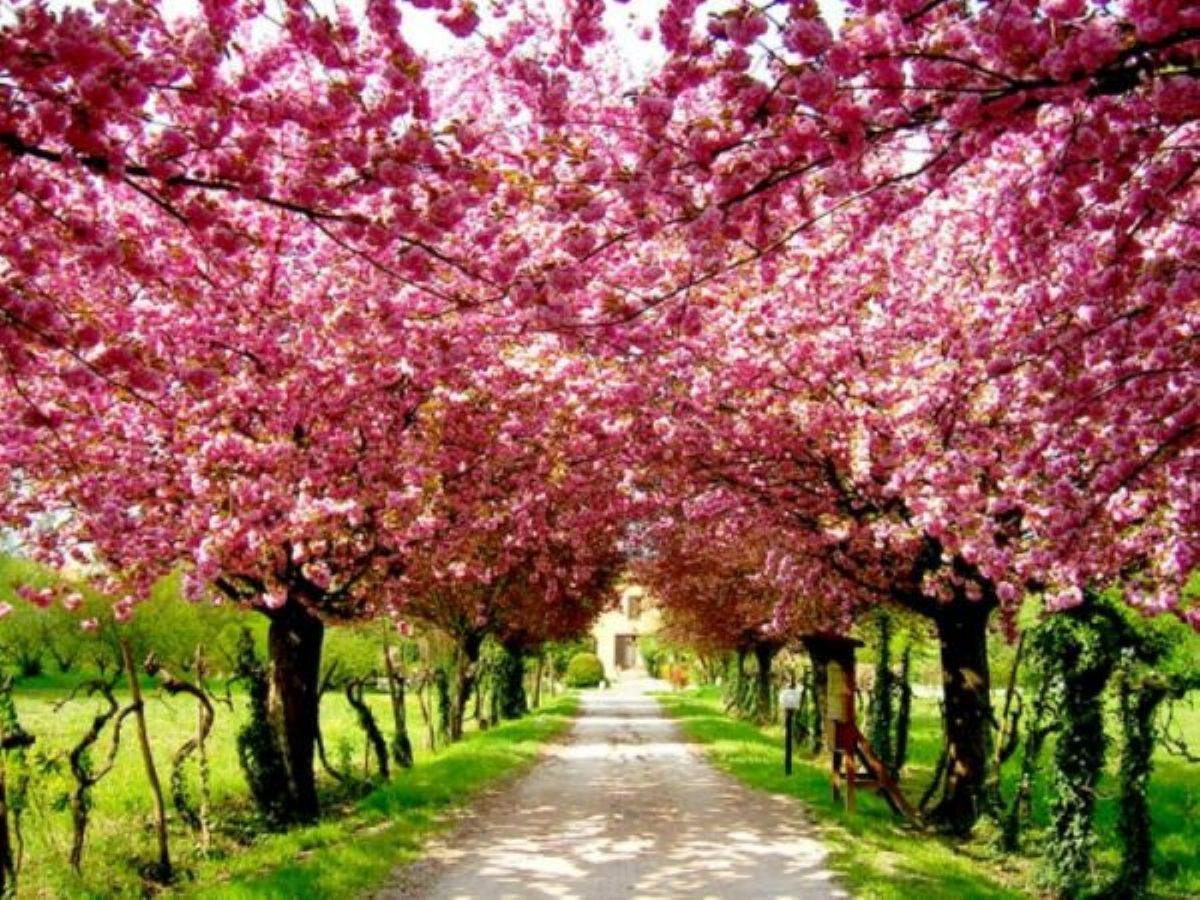 Rüyada Bahar görmek