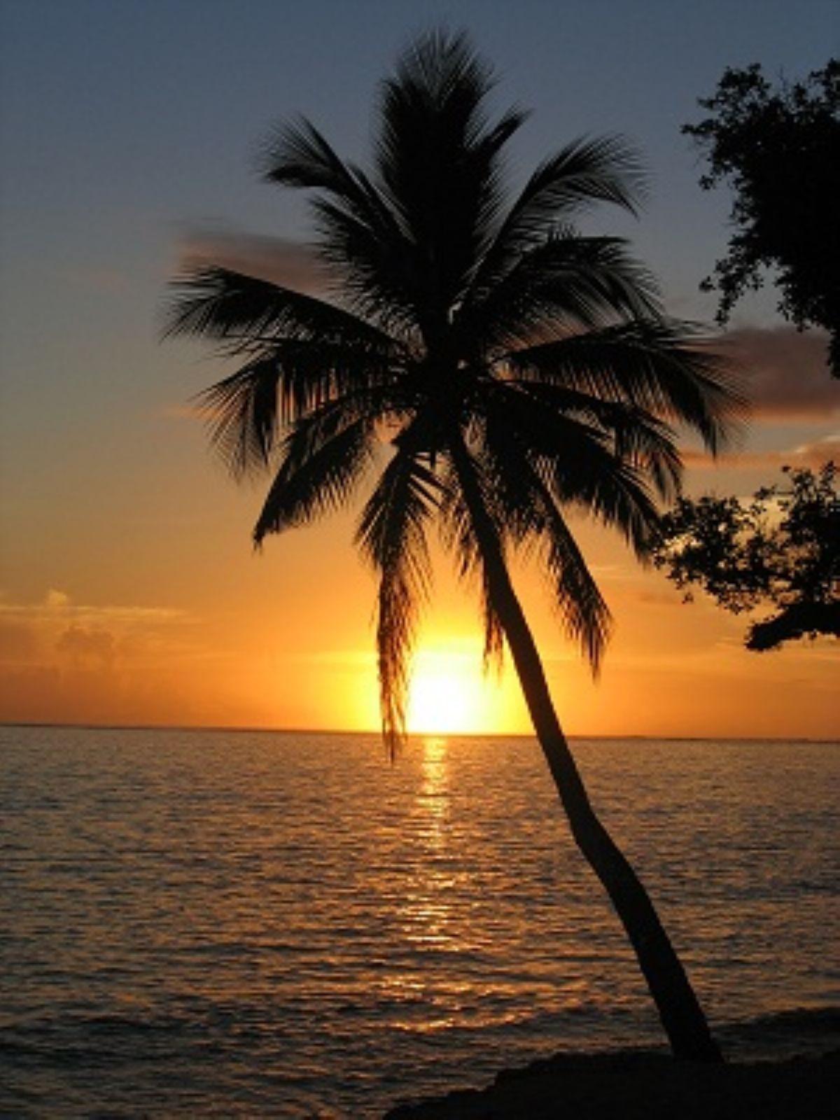 Rüyada Palmiye ağacı görmek