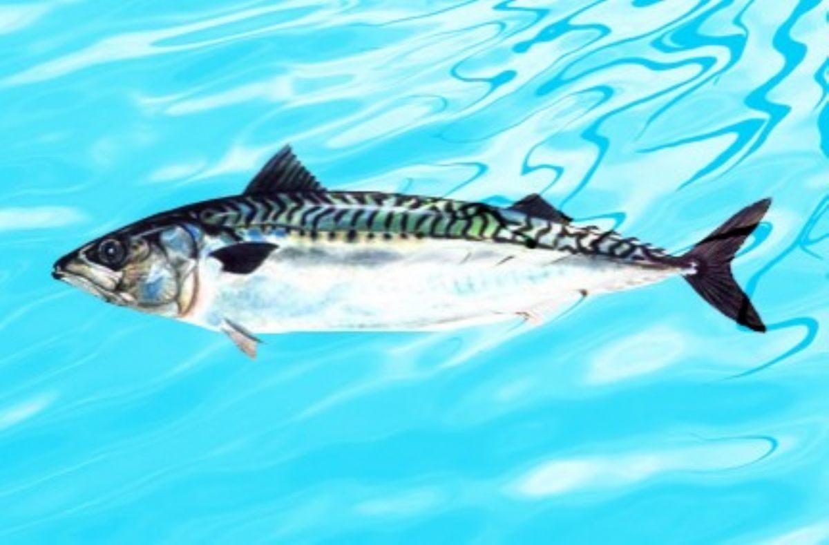 Rüyada Uskumru balığı görmek